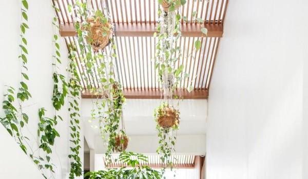 """Giải pháp """"xanh"""" hóa trong thiết kế không gian nội thất"""